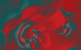 Bloom Album by Sarah Kroger